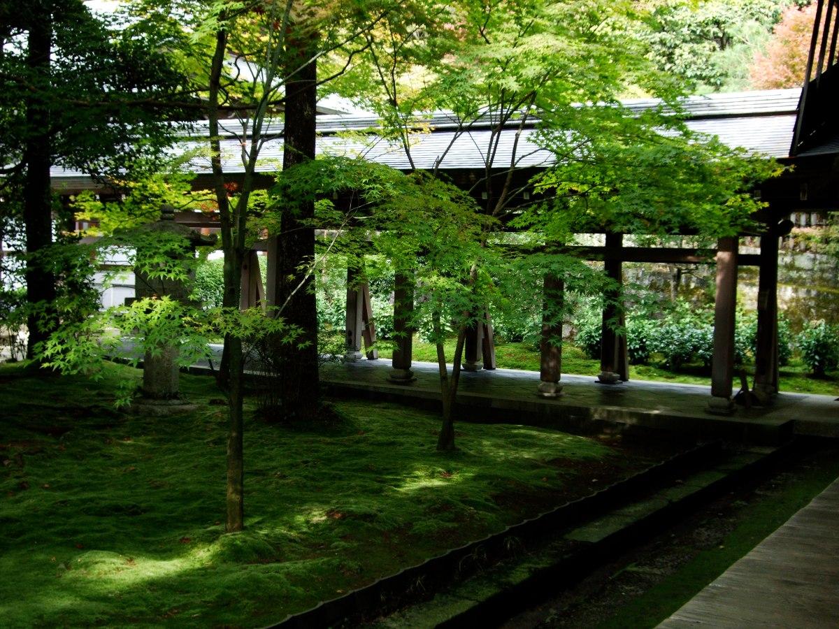 Kyoto japan moss garden emily wheeler - Moosgarten kyoto ...